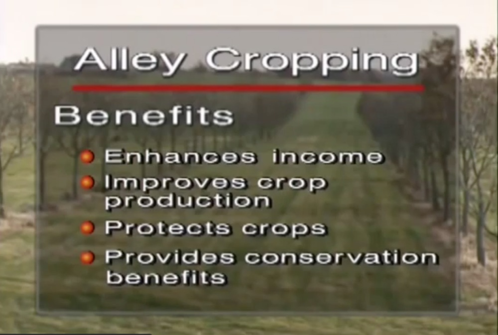 Alley Cropping Benefits