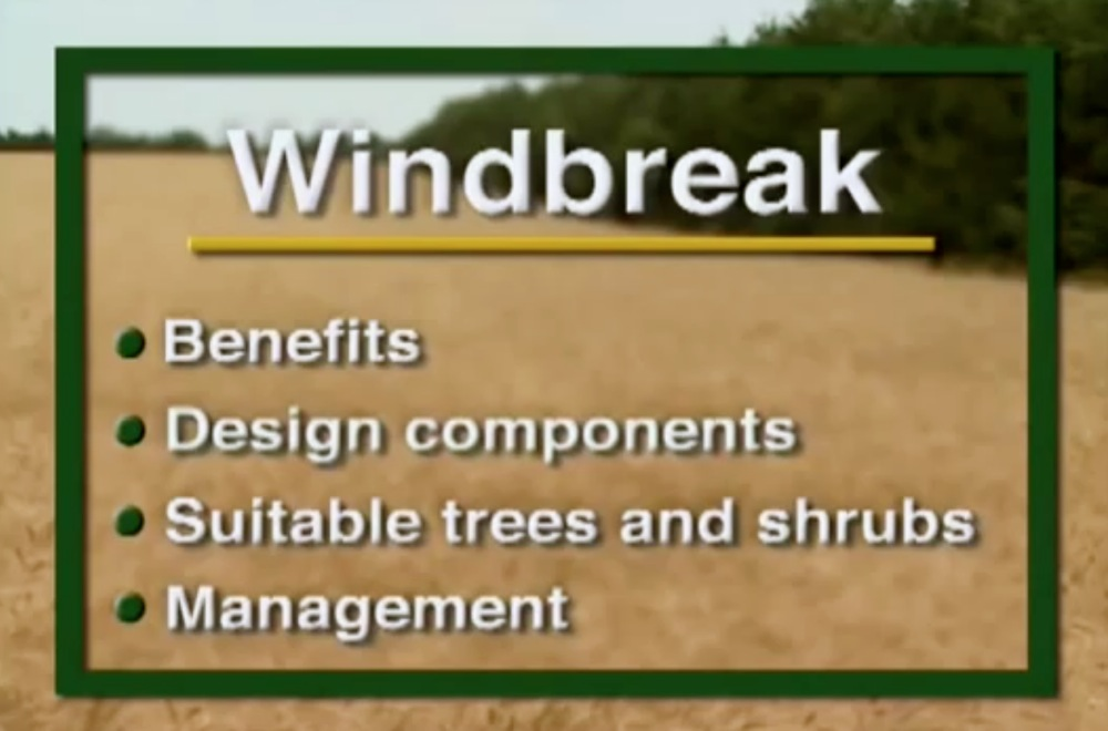 Windbreaks - Design Considerations