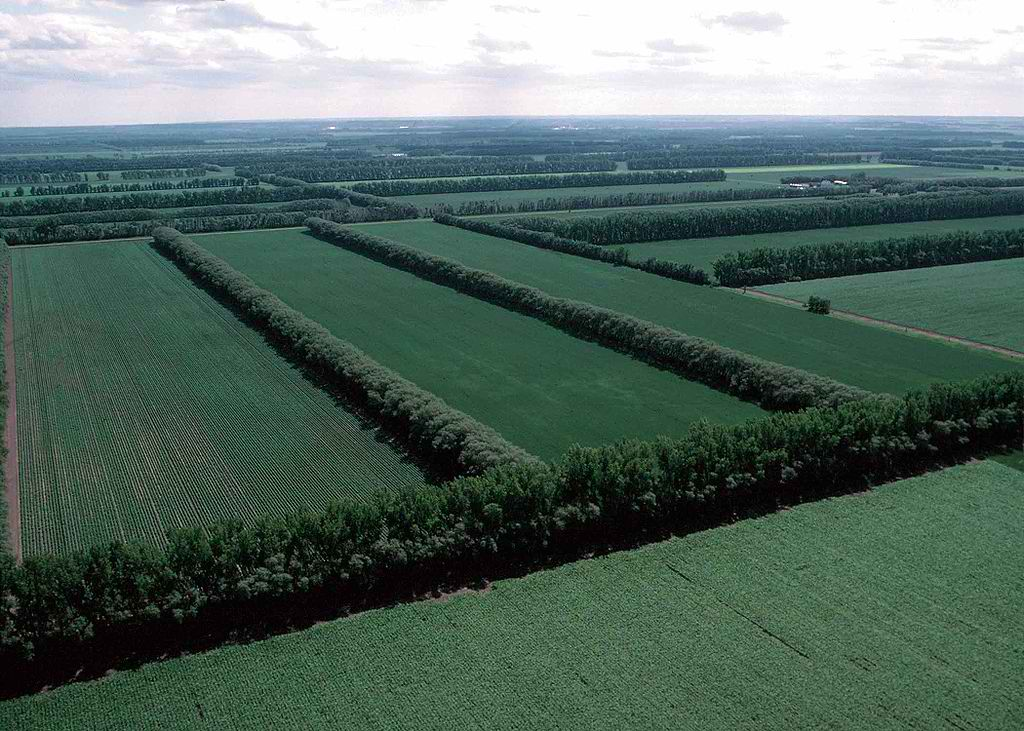 Field Windbreaks in Nrth Dakota