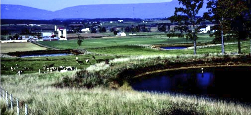 This pond supplies water to a stockwater trough used by cattle in nearby grazing area
