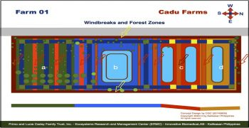Cadu Farm 01 Projects : Windbreaks and Forest Zones